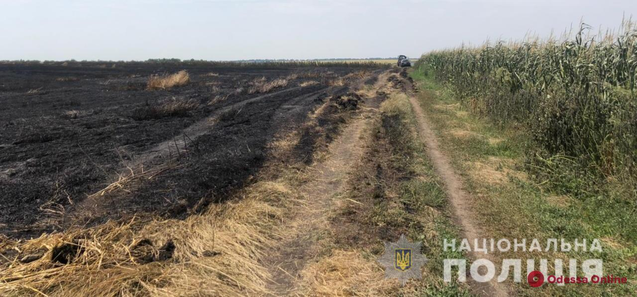 В Одесской области подожгли пшеничное поле — полиция открыла уголовное производство (фото, видео)