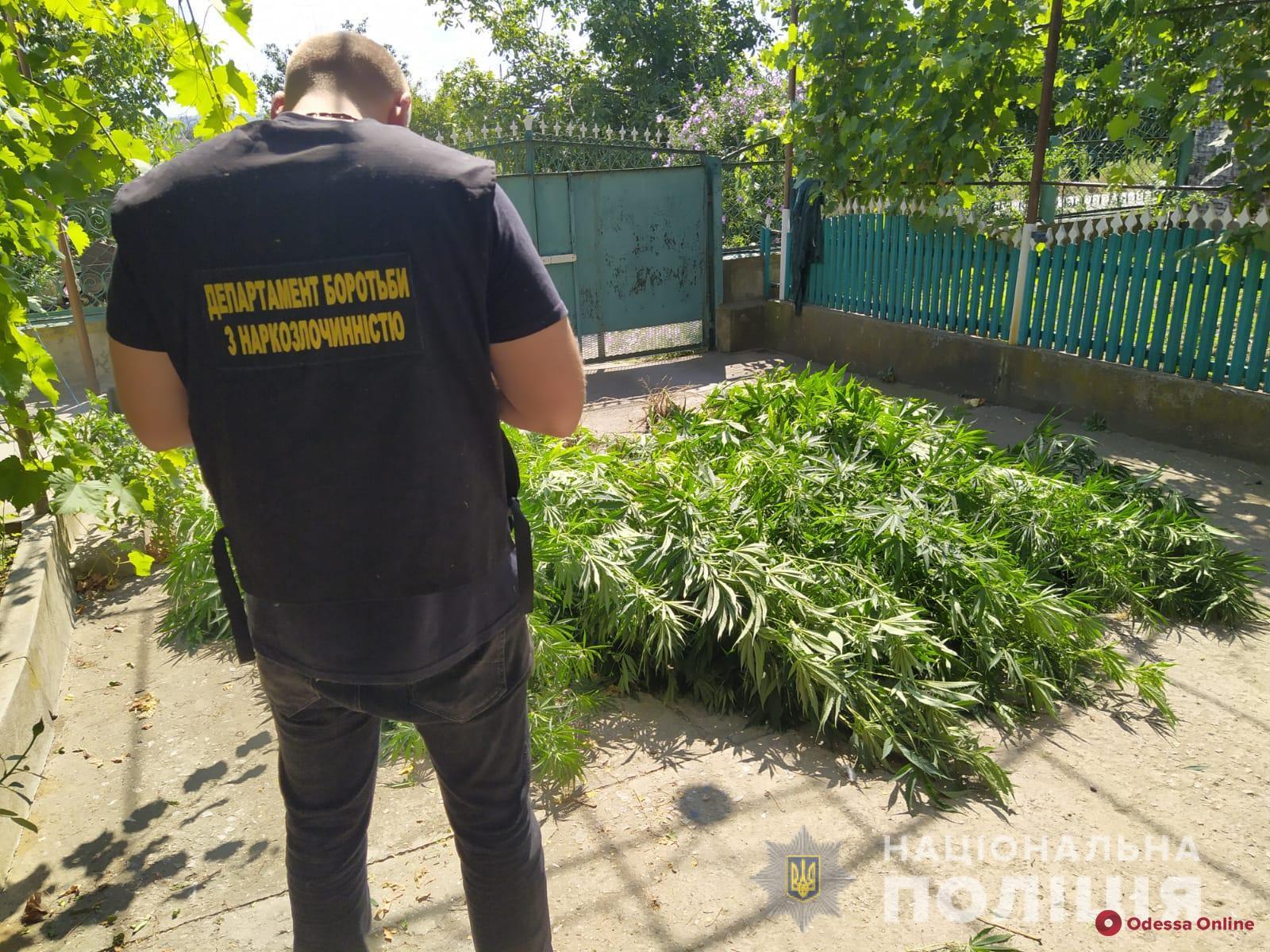 Выращивали «травку», хранили патроны и безакцизный табак: силовики разоблачили пятерых жителей Измаильского района