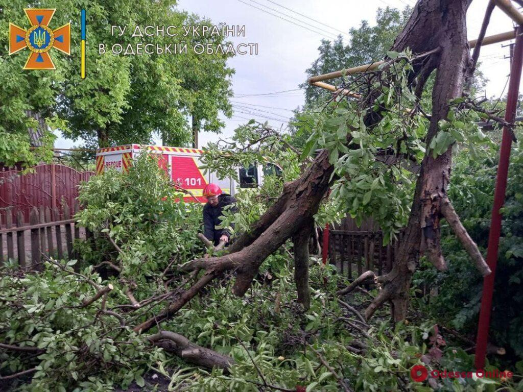 Поваленные деревья и сорванная крыша школы: на севере Одесской области ликвидируют последствия бушевавшей стихии