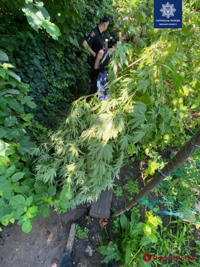 Одесские патрульные приехали на вызов о ссоре и нашли мини-плантацию конопли