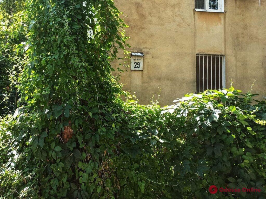 Зеленый городской декор: вертикальные сады и «фантастические персонажи» (фотозарисовка)