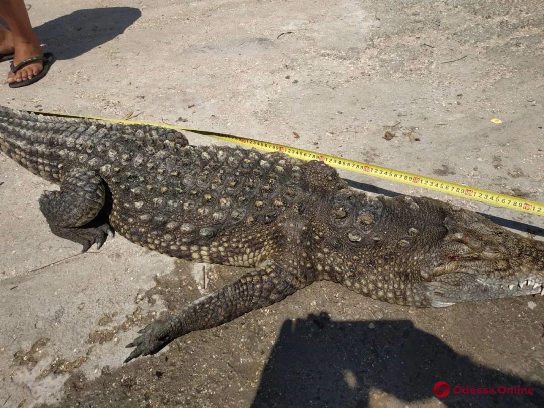 Инцидент на Арабатской стрелке: в Херсонской области погиб крокодил
