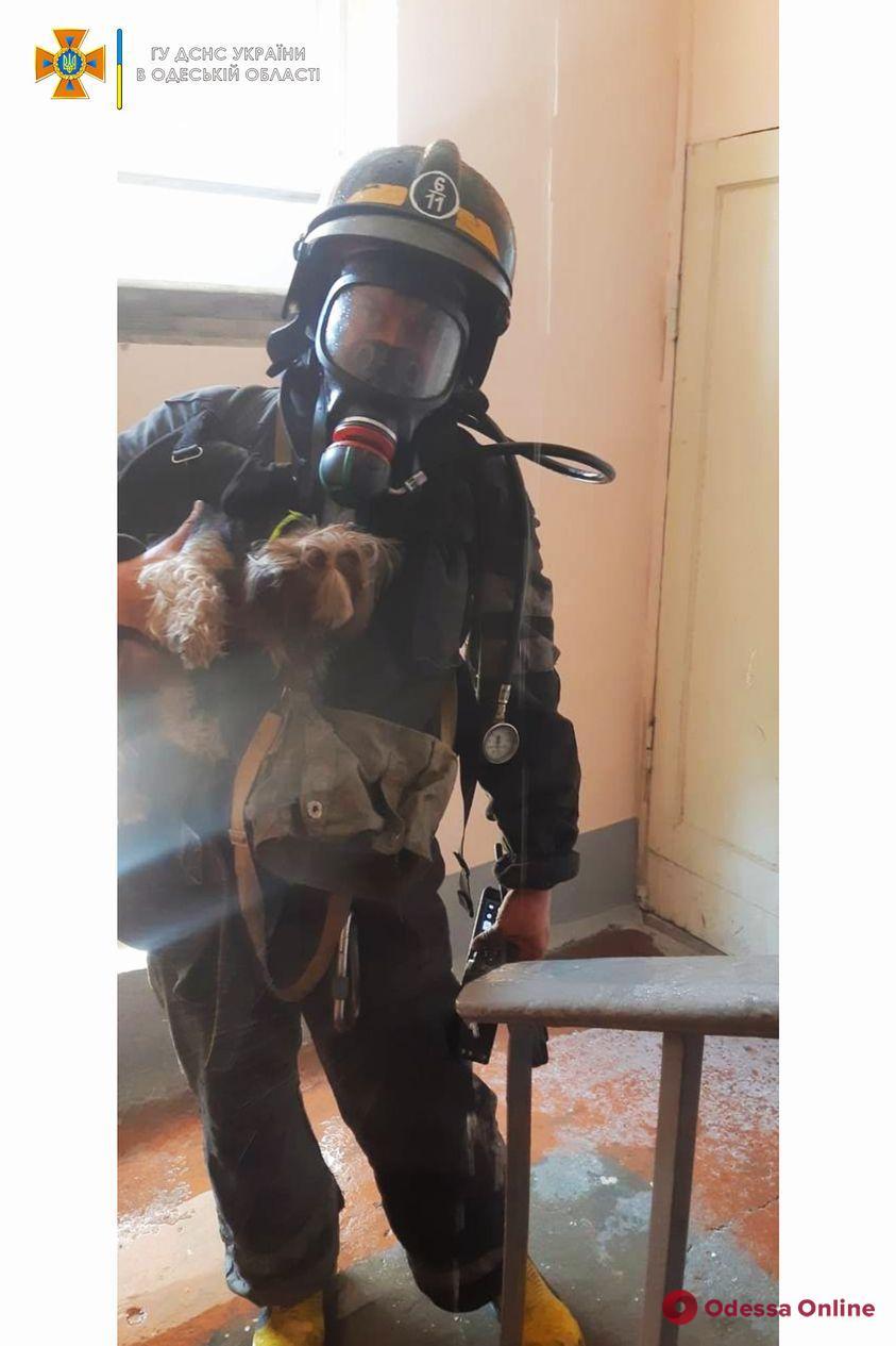 «Бедный йорик»: в Одессе спасли собачку из горящей квартиры