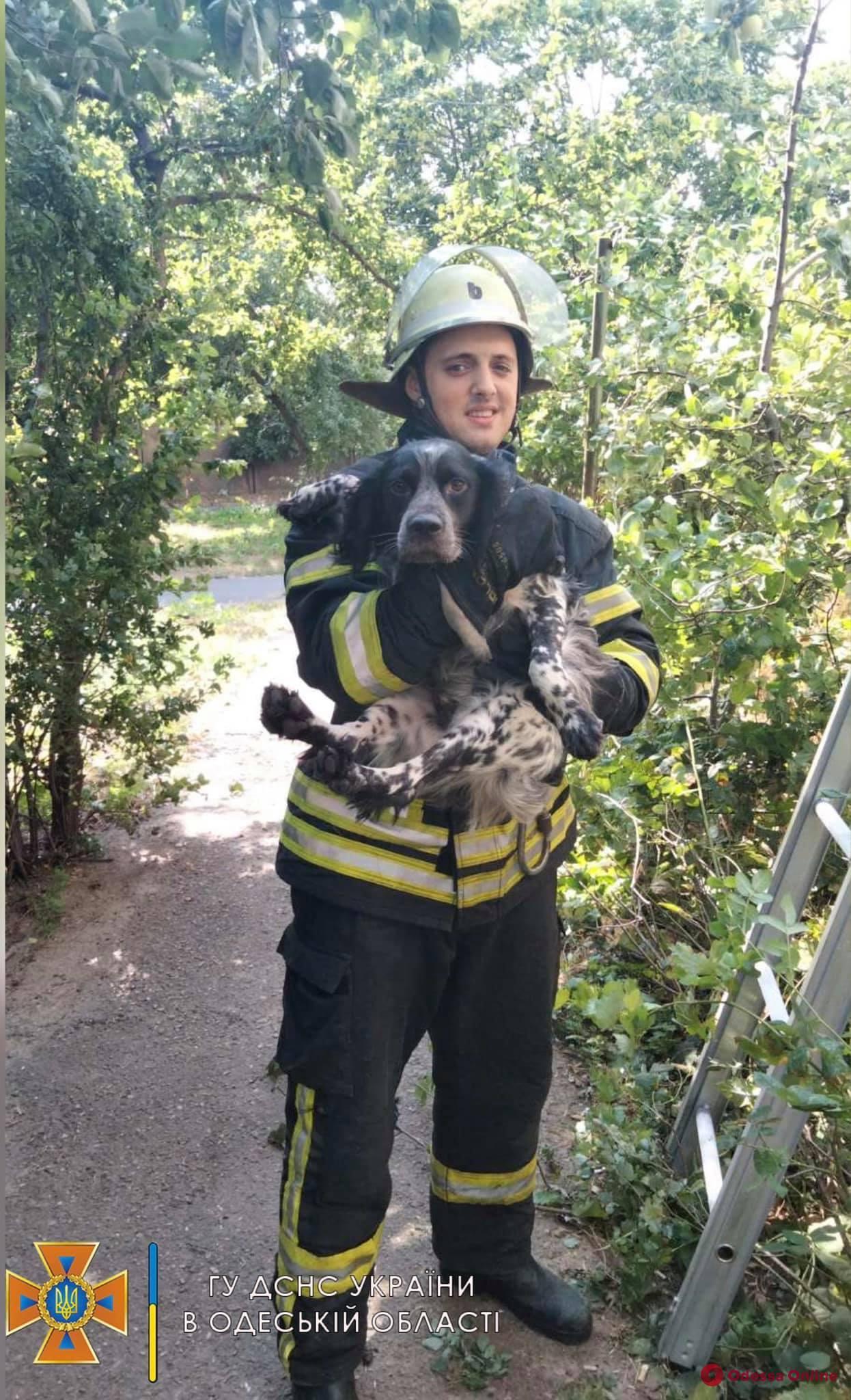 На Таирова спасатели сняли с крыши балкона собаку, которая выпала с 6-го этажа