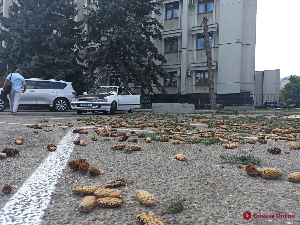 Возле Одесской ОГА начали пилить голубые ели
