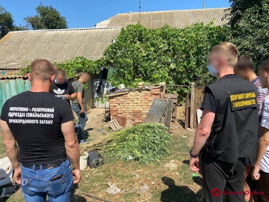 Большой рейд: в Рени и окрестных селах правоохранители нашли семь плантаций конопли (фото, видео)