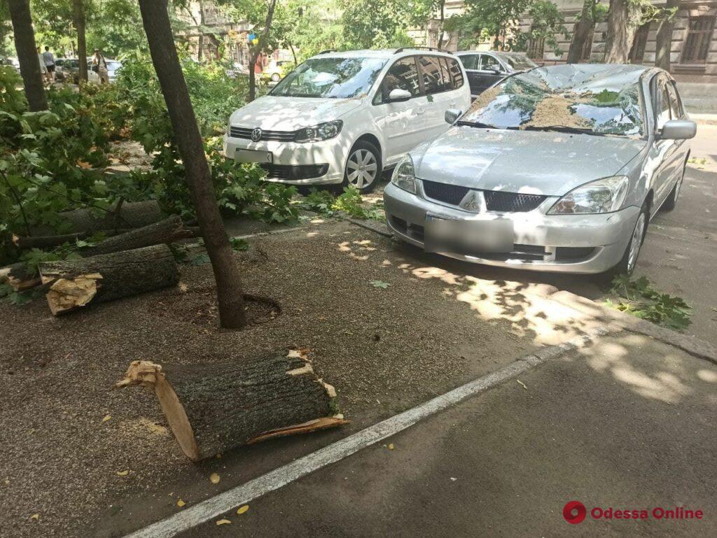 В центре Одессы массивная ветка рухнула на припаркованные автомобили (фото)