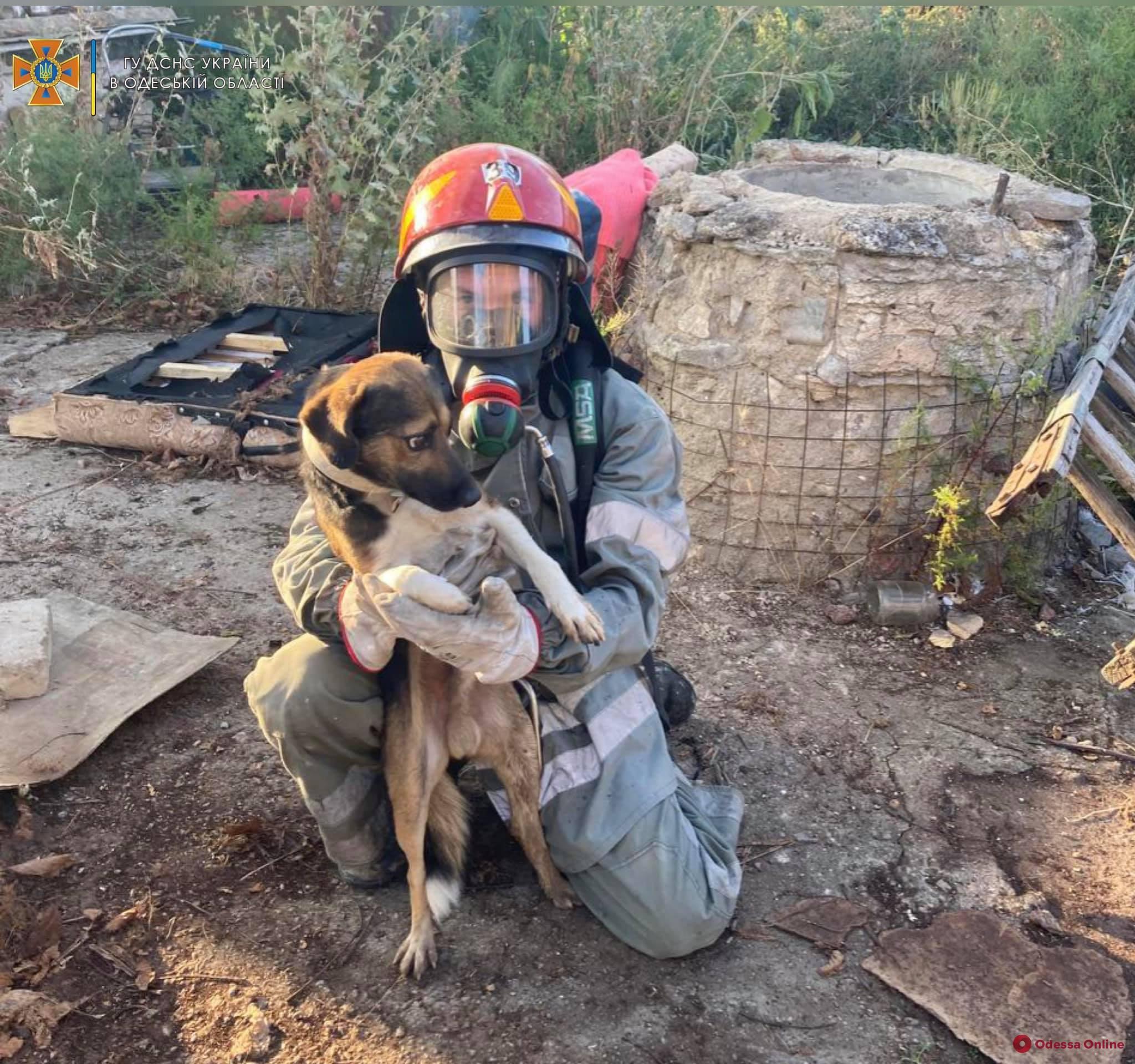 В Одесской области сотрудники ГСЧС спасли упавшего в колодец пса