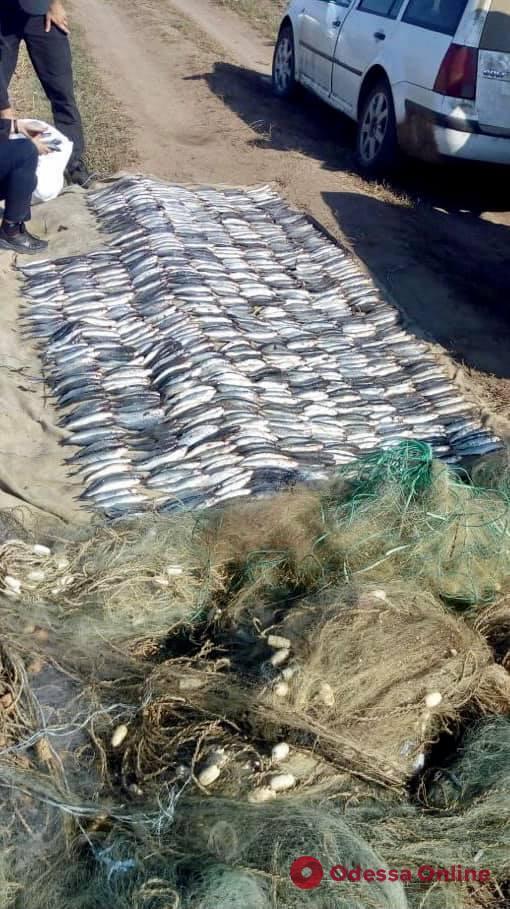В Одесской области поймали браконьеров с уловом кефали почти на два миллиона