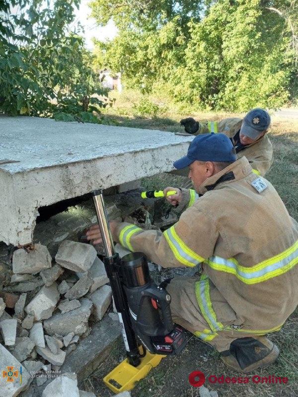 В Одесской области спасли упавшую в выгребную яму собаку