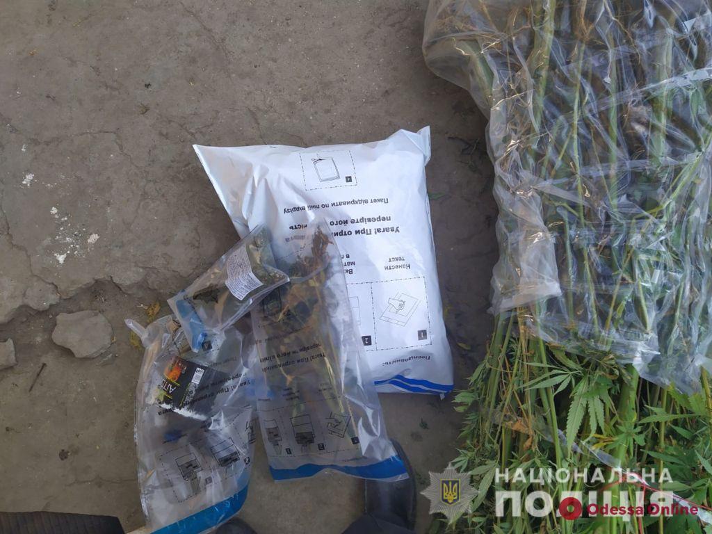 Житель Килии вырастил плантацию конопли «для собственных нужд»
