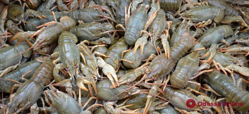 Сезонная линька: на Дунае и придунайских озерах запретили ловлю раков