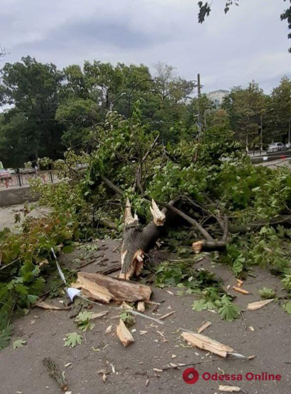 На территории одесской школы №16 рухнула массивная ветка