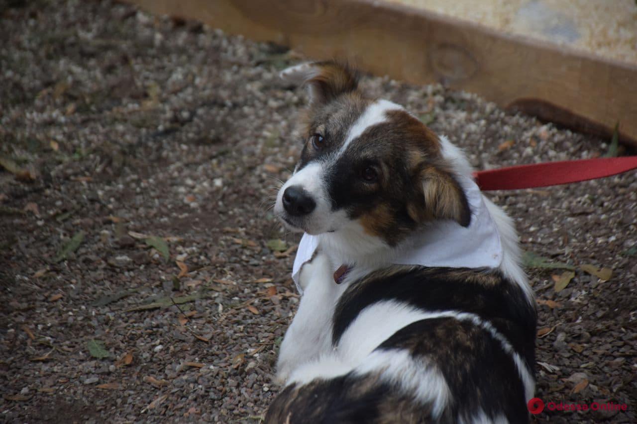Ноme Me Fest#6: в Одессе стартовал фестиваль, дарящий животным дом