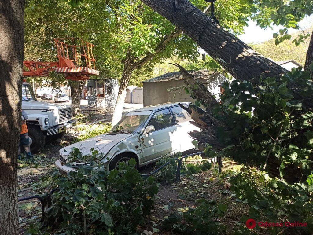 В районе 8-й станции Фонтана огромный тополь рухнул на шесть машин (фото)