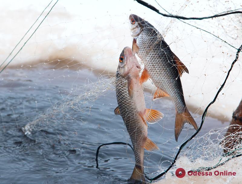 В Украине в десятки раз увеличили штрафы за незаконный вылов рыбы