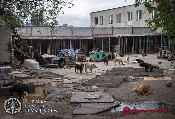 В Одессе предприниматель с помощью чиновницы украл сотни тысяч на ремонте приюта для животных