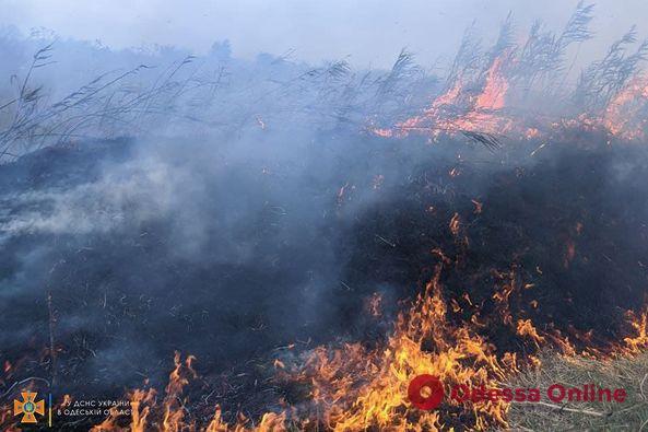 За сутки в Одесской области сгорели 24 гектара сухой травы