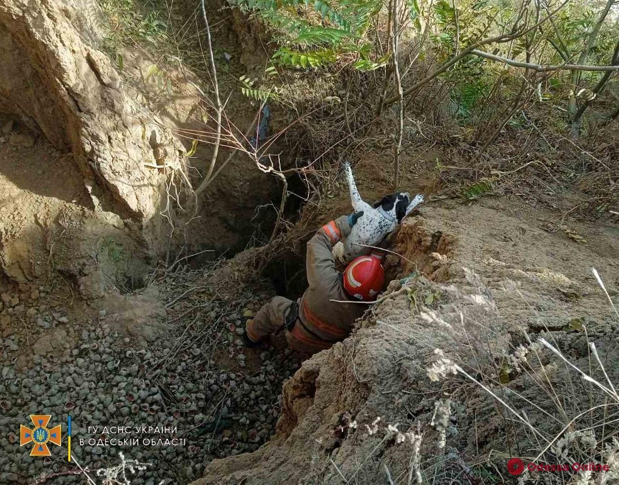 В Одесской области сотрудники ГСЧС спасли пса из пятиметровой ямы