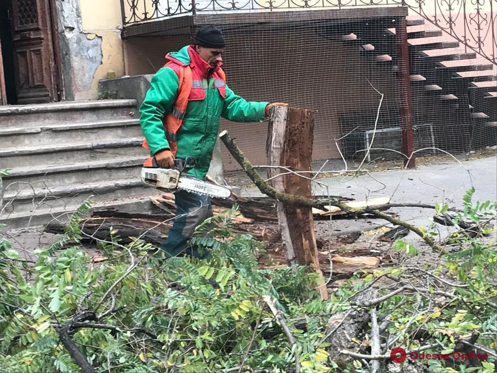В центре Одессы подрезают деревья: водителей просят не парковаться в районе проведения работ