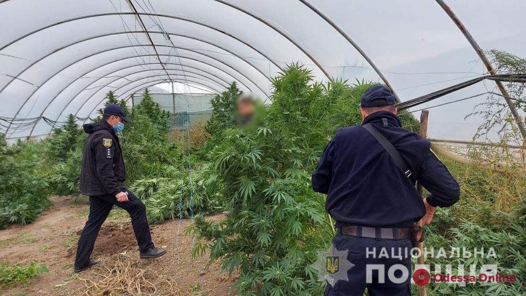 У жителя Одесской области полиция нашла теплицу с плантацией конопли (фото)
