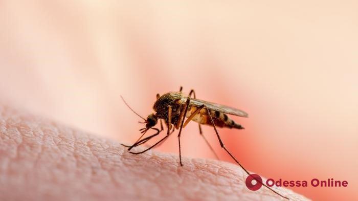 «Исторический день»: ВОЗ впервые одобрила вакцину от малярии