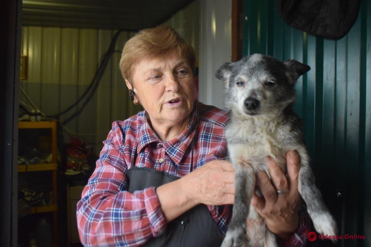 Выиграли гранты, но ремонт так и не начался: приют для животных «Ковчег» оживает после пожара