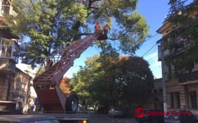 Водителей просят не парковать авто на Лейтенанта Шмидта из-за обрезки деревьев