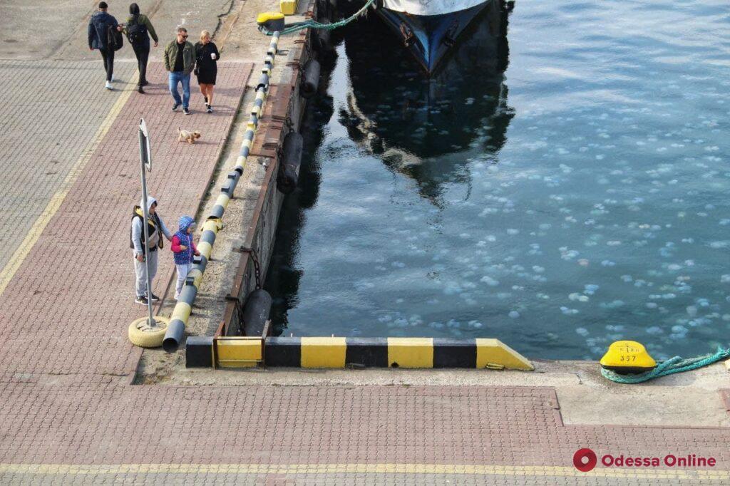 Море у берегов Одессы кишит медузами (фоторепортаж)