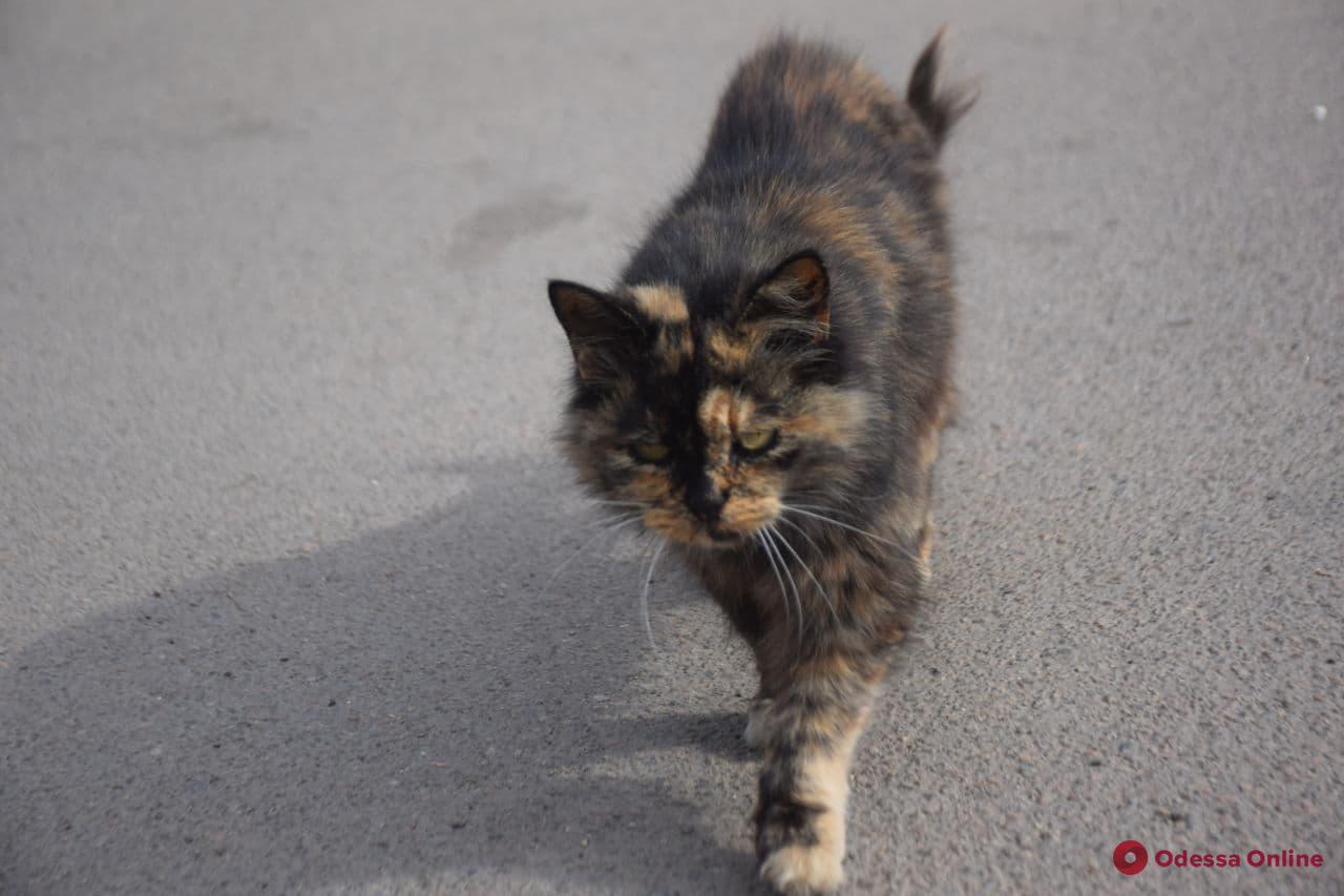 Самые умные, добрые и заслуживающие нашей любви: фотоподподборка одесских «хвостиков» ко Всемирному дню защиты животных