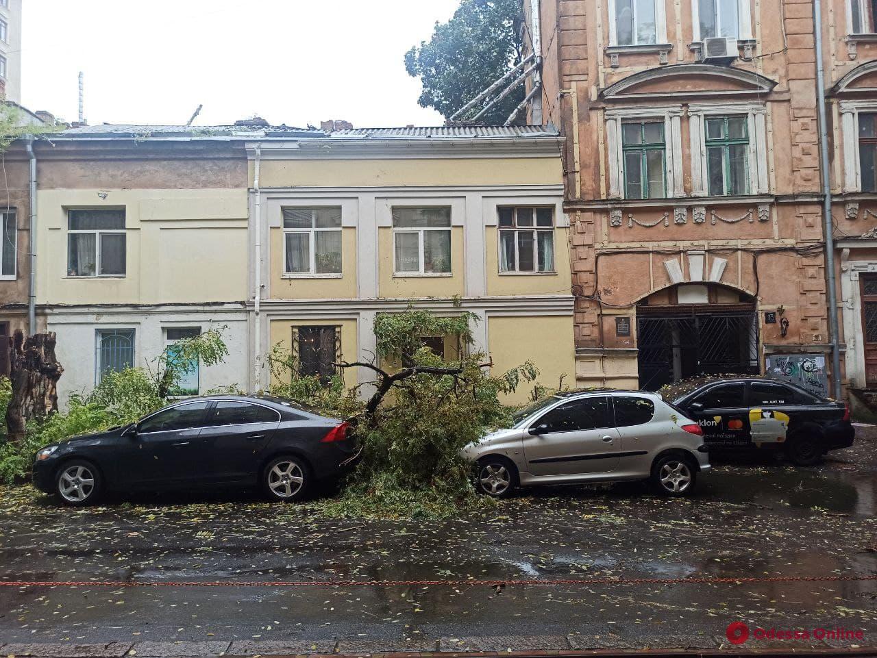В центре Одессы упавшее дерево повредило три автомобиля